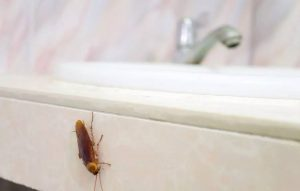 cucaracha en el baño de la casa