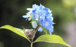 caracol en flor