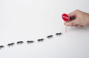 detener las hormigas