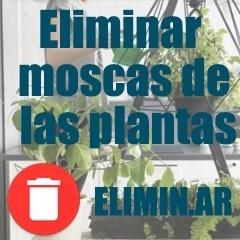 eliminar moscas de las plantas